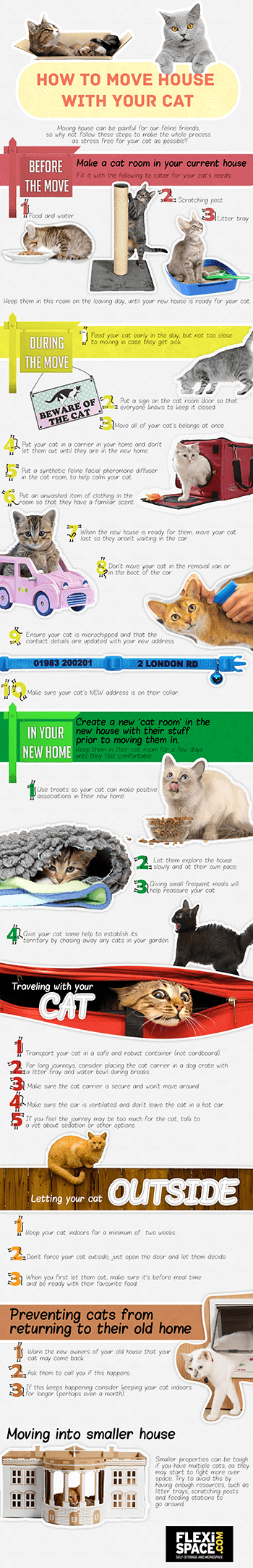 moving house with your cat infographic